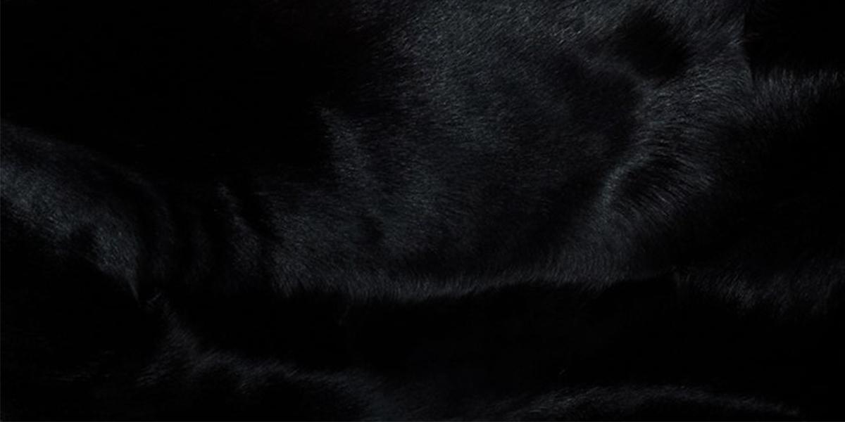 fur-1200x600