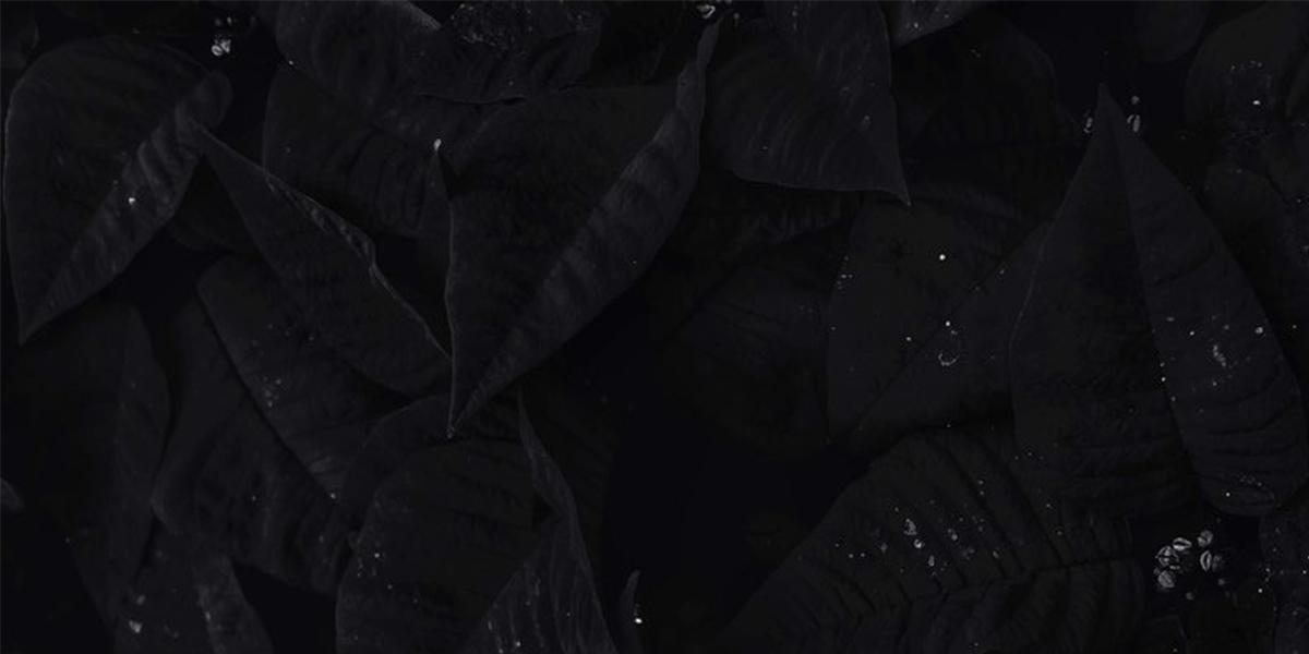 leaves-1200x600